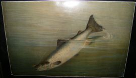 A. D. Turner & Frank Johnson 1902 LG Folio Fish Print. Salmon